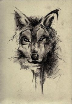 Набросок волка карандашом