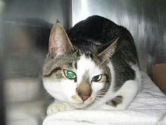 Please save Apple.doomed to die today..hos owner died and now he is at the high kill shelter ACC in New York City URGENT visit pets on death row on Facebook. It is Easter save his life...