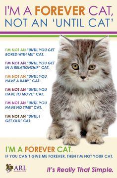 FOREVER CAT!