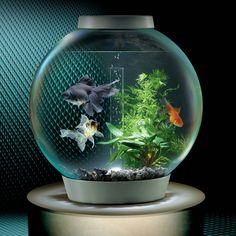 The Low Maintenance Clear View Aquarium - Hammacher Schlemmer