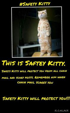 #safety kitty<< this is adorable
