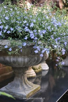 Gypsy Purple home. : Gypsy Purple home. Container Plants, Container Gardening, Beautiful Gardens, Beautiful Flowers, Pot Jardin, Urn Planters, Garden Urns, Purple Home, Garden Inspiration
