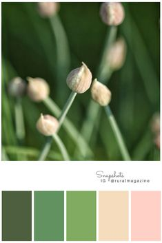 Cherished chives, color palette from Rural magazine's IG feed. Pink and green tones sooth in the latest issue of the magazine.