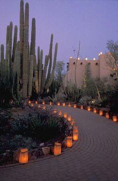 The Luminaria in the Desert Botanical Garden, Phoenix Arizona. Paving the walkway with luminaria would be a lovely touch for a home. Desert Dream, Desert Life, Desert Botanical Garden, Botanical Gardens, Landscape Design, Garden Design, Desert Landscape, Desert Homes, Plein Air