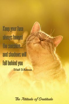 """Keep your face always toward the sunshine, and shadows will fall behind you.""  ~Walt Whitman, born May 31, 1819."