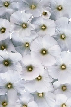 84 best white blossoms flowers images on pinterest white flowers pretty white thingsblue flowersbeautiful mightylinksfo