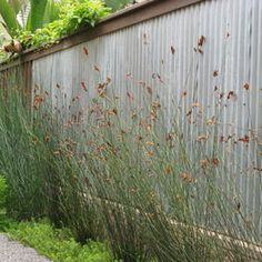 corrugated metal fence-maybe King couldn't escape from this fence!!