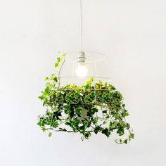 Designed by Israeli designer Meirav Barzilay, Photosynthesis Lamp - Plant Lighting that was created as a natural harmony, very uniquely combines metal grids with vine at its base.