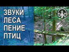 Настоящие Звуки природы Живой лес Пение птиц 3 часа - YouTube