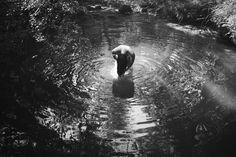 Summer Swim by pauline-greefhorst on DeviantArt