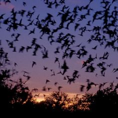 Bats: The Original Natural Bug-Buster   Bats just love mosquitoes and can eat as many as 600 in a single hour. And it's not just mosquitoes - they eat all kinds of pests that you don't want in your garden! In this post from Yahoo, you'll find out how you can attract bats to your home. Don't be scared by Dracula stories - bats are really good for us, and they're increasingly in danger, so if you welcome bats it could be a real win-win.