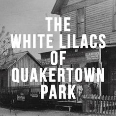 Historic facts behind the historical fiction White Lilacs (1993), Carolyn  Meyer's novelization of the forced eviction for Denton TX African-American  Quakertown district.