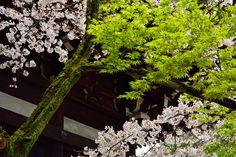 京都日和 〜 Kyoto Biyori ~ : 4月 2015