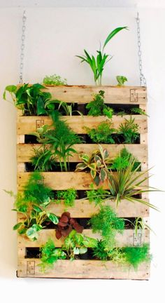 Vertical gardens, also called living walls, are all over us for a reason. They have become very popular and are used both for outside and inside. One of the reason for their popularity is the fact they don't take much space and you can plant lots of