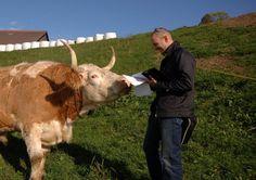 La difficile et délicate interview d'un boeuf menée avec brio par Raphaël Delessert. Photo: Chantal Dervey Cow, Interview, Photos, Animals, Animales, Animaux, Animal Memes, Animal, Animais