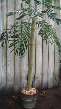 How to Make Outdoor Artificial Palm Trees .. definitely doing this over weekend!