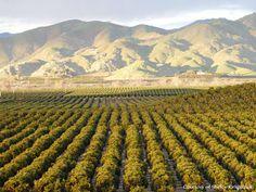 california central valley - Google Search