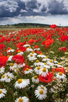 Summer In Derbyshire, England