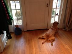 犬は数年間これをしており、今度、6ヶ月の赤ちゃんが加わりました。 (via imgur: the simple image sharer)