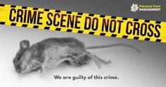 Let justice be served in your home. Call Parsons Pest Management Now! Tick Control, Pest Management, Pest Control Services, Flea And Tick, Rodents, Fleas, Crime, Crime Comics, Fracture Mechanics