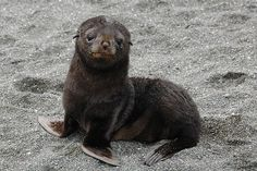 seal the deal with this cute face. gahd what a cutie!