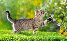 Seven Toxic Plants to Keep Away From Pets Pet owners are being warned about deadly, toxic, and harmful plants commonly found in the garden. The experts at Lazy Flora, a plant subscription site, have revealed a list of things growing in gardens, that need removing when curious pets are around. Safety at home for pets to be able to roam freely is paramount. […] #Cat, #Cats, #Katze, #Katzen, #Katzenworld, #Pets, #ねこ, #猫 #AdviceTips