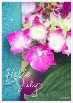 Hello July! pink flowers