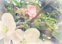 Lps cat spring Apple blossoms