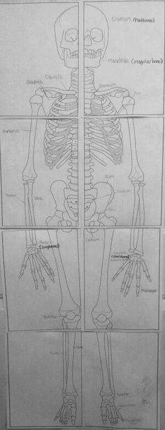 Printable Human Skeletal System- because you never know when you might wish you had one?