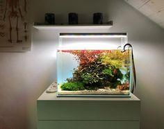 Aquarium Light for Indoor Plants