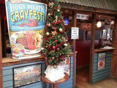 Hog's Breath Cafe Napier #kiwihospo #HogsBreathCafeNapier #KiwiBars #KiwiCafes Hogs Breath Cafe, Kiwi, Christmas Tree, Holiday Decor, Home Decor, Teal Christmas Tree, Decoration Home, Room Decor, Xmas Trees