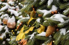 Follow me in inst Follow Me, Plants, Christmas, Yule, Xmas, Flora, Plant, Christmas Movies, Noel