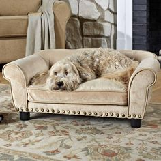 Enchanted Home Pet Furniture eases your dog into a luxurious cushion that engulfs them in complete comfort and warmth. Ultra plush dreamcatcher sofa pet bed fits pets up to 30 lbs with studded ridge for a edgy touch. Joss Y Main, Elevated Bed, Dog Sofa Bed, Sofa Beds, Cool Dog Beds, Enchanted Home, Pet Furniture, Modern Furniture, Smart Furniture