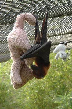 bat and his bear