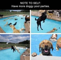 5 videos of Doggie Pool Parties
