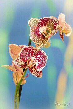 Gorgeous and Delicate Orchid!