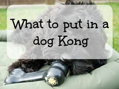 What to put in a dog Kong