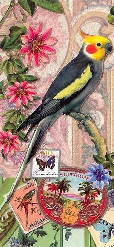 Easter card from Germany....we had a bird that looked like this once, until he flew away. Miss you Chuck.