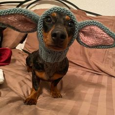 KNITTING PATTERN Dachshund Unicorn Hood dog hat dogs pet | Etsy Cute Puppies, Cute Dogs, Pom Dog, Miniature Dachshunds, Silly Dogs, Mini Dachshund, Pet Costumes, Dog Gifts, Knitting Patterns