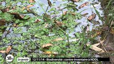 Notre-Dame-des-Landes - Bocage Dense en Milieu Humide Oligotrophe