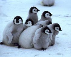 cute pack of penguins