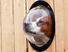 My dogs would LOVE this! Pet peek ~ Might be a good deterrent, too, if you have a 100+ lb. Rottweiler using it! But I'd need more than one.