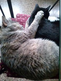 La Sigrid es un animal posesivo hasta durmiendo :-)