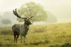 Deer! #PatrickBorgenMD