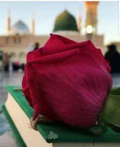 Quran Wallpaper, Mecca Wallpaper, Islamic Wallpaper, Cool Wallpaper, Beautiful Names Of Allah, Beautiful Prayers, Muslim Pictures, Islamic Pictures, Ramadan