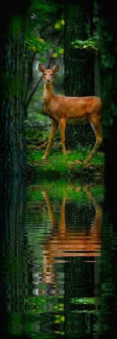 Deer in wild animal photography Nature Animals, Animals And Pets, Cute Animals, Beautiful Creatures, Animals Beautiful, Photo Chat, Tier Fotos, Mundo Animal, All Gods Creatures