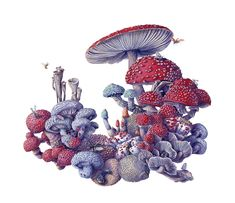 Watercolor painting by Martha Iserman aka Big Red Sharks Studios Watercolor Images, Watercolor Paintings, Sharks, Natural History, Big, Mushroom, Illustration, Artist, Artwork