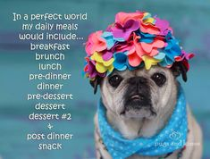 In a perfect world my daily meals would include....