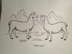 llama llove awww