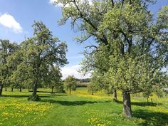 Golf Courses, Hiking, Plants, Walks, Planters, Trekking, Hill Walking, Plant, Planting